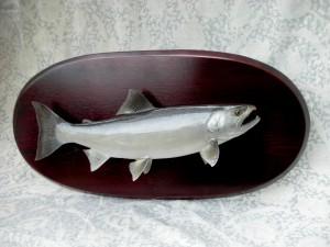サクラマスの剥製(小判型ボード取付け例)イメージ