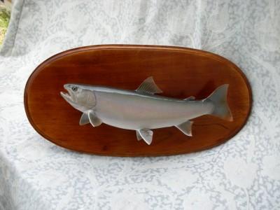 ヤマトイワナの剥製イメージ