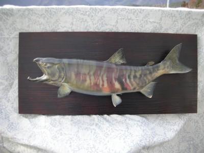 サケの剥製イメージ