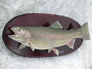 ご依頼魚の剥製加工のイメージ