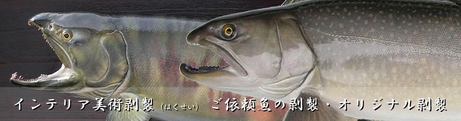 インテリア美術剥製(はくせい)ご依頼魚の剥製・オリジナル剥製